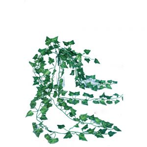 צמח סילבר דולר גזע טבעי ג.129