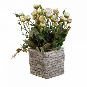 """שיח ניצני פרחים בעציץ קרמי ג.20 ס""""מ-ירוק"""