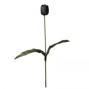 """ענף טוליפ שחור ג.60 ס""""מ"""