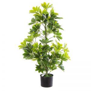 """צמח שיפלרה גובה 92 ס""""מ בעציץ"""