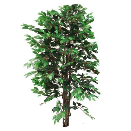 צמח פיקוס בינימינה ג.טבעי ג.180 1344 עלים-ירוק