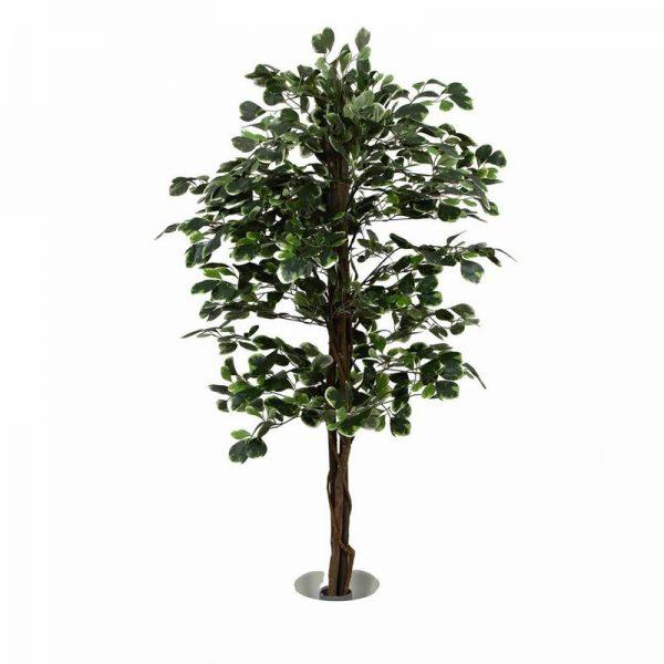 צמח שקדיה גזע טבעי ג.1.7 מטר-ורוד