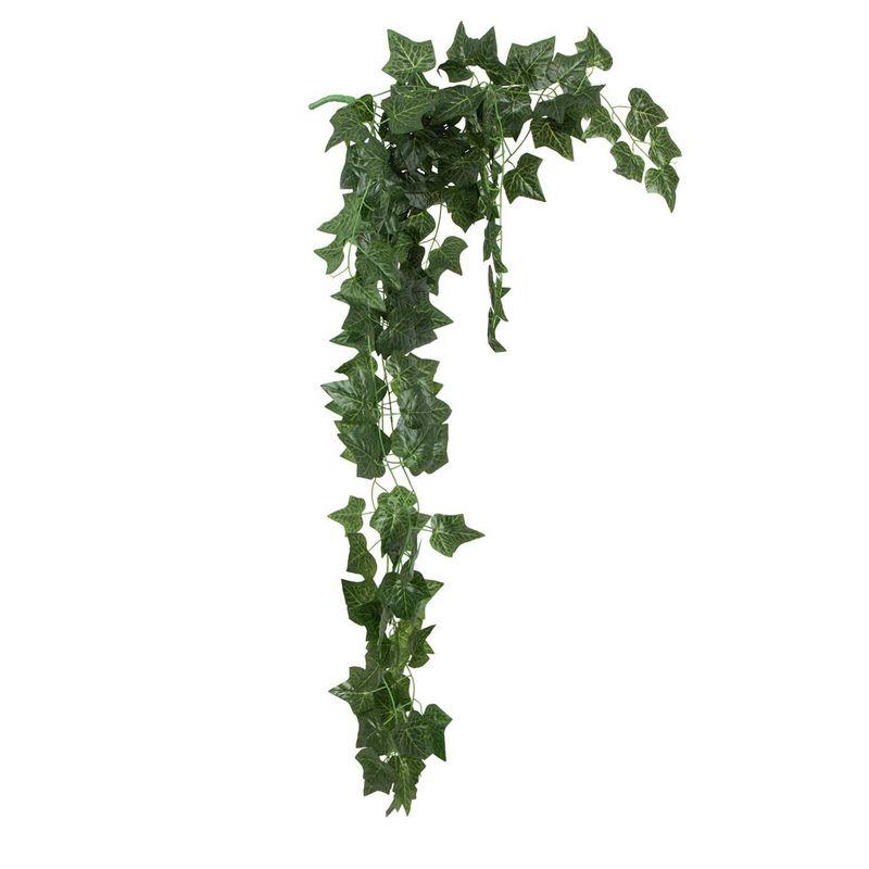 """צמח סילבר דולר מגוון גזע טבעי ג.130 ס""""מ"""