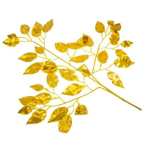 ענף פיקוס בינימינה זהב
