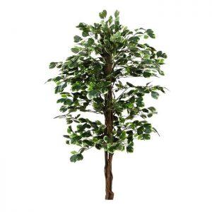 צמח פיקוס בינימינה ג.טבעי ג.180 1344 עלים-מגוון