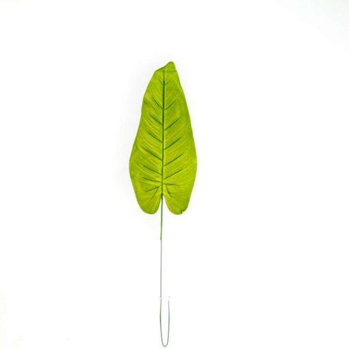 """ענף אוזן פיל א.76 ס""""מ"""