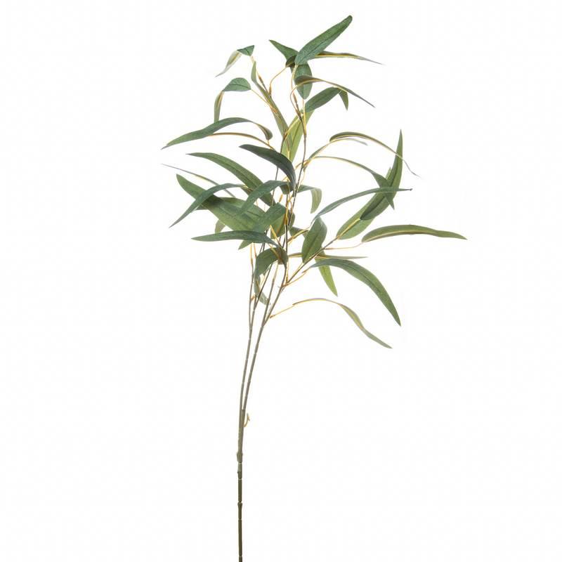 """ענף עלי ערבי נחל ג.105 ס""""מ"""